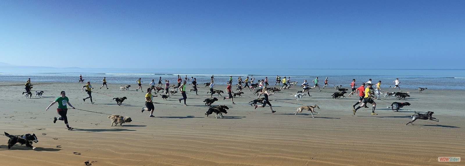 ...running with dogs